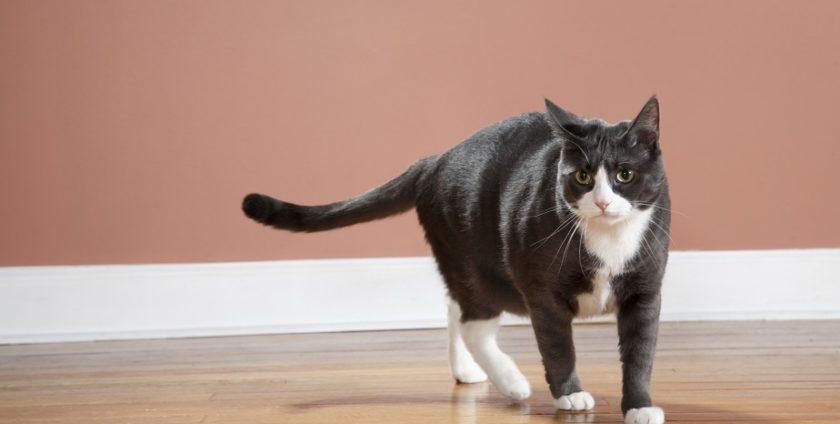 kot a podłoga